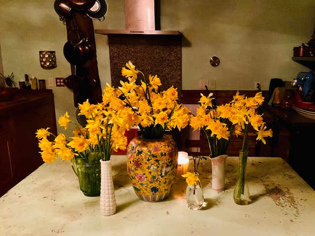 Daffodils in my kitchen.